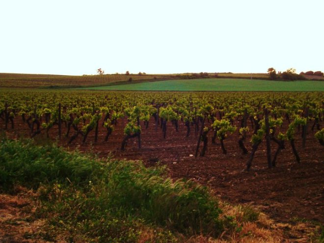 Beziers Vineyard