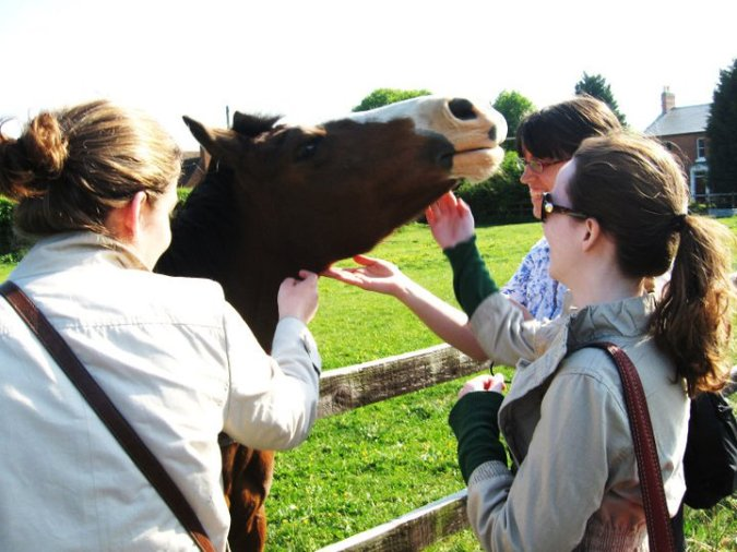 England Horse